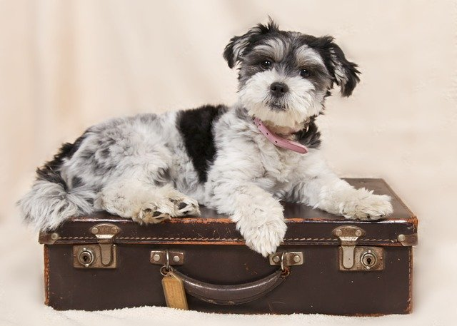 Top 10 Tips for Taking a Trip with your Pet