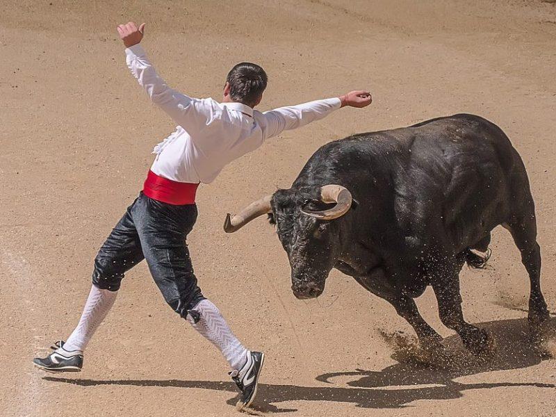 Watch a Bullfight
